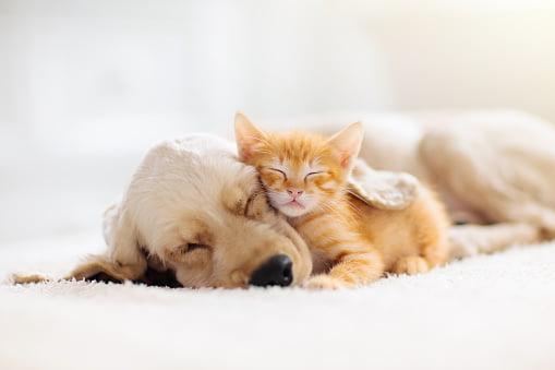 cinco tips para mantener saludable el pelaje de los perros y gatos dogs cats